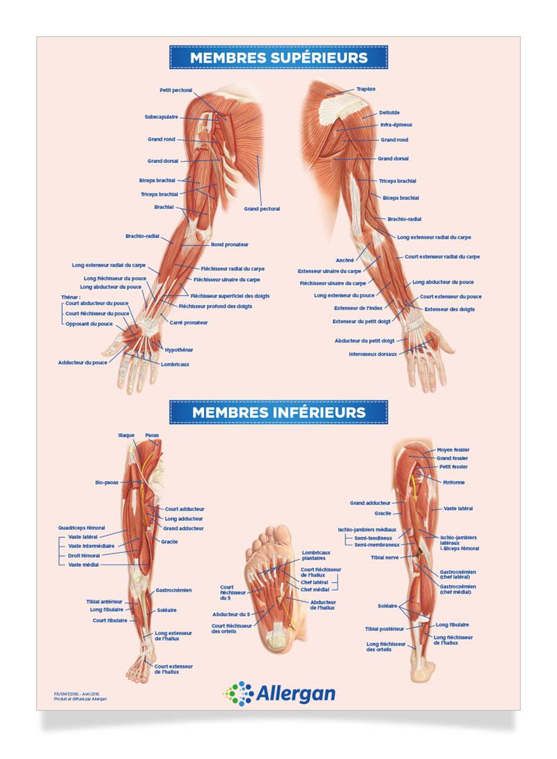 Poster Médical